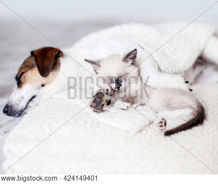 Adorable pets. Cat and dog sleeping together. Dog and little kitten on white blanket