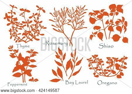 Hand Drawn Culinary Herbs Silhouettes. Rosemary, Oregano, Thyme, Shiso, Peppermint And Laurel Bay Tw