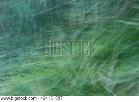 Abstract Background Of Tall Grass In Green-turquoise Shades. The Photo Was Created By The Movement O