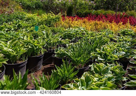 Sale Of Young Seedlings In The Garden Center. Rows Of Pots In A Plant Nursery.
