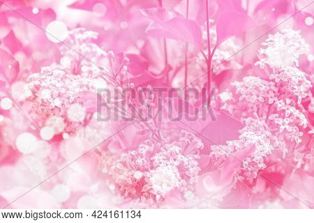 A Toned Image Of A Blooming Lilac. Dreamy Gentle Air Artistic Image. Soft Focus.