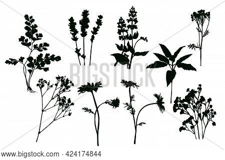 Set Of Silhouettes Of Field Herbs And Flowers. Black Imprint On White Background.
