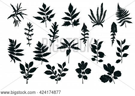 Set Of Silhouettes Of Leaves. Black Imprint On White Background.