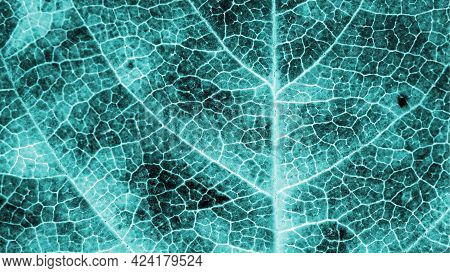 A Leaf Of A Tree Close-up. Monochrome Plant Background Or Wallpaper. Mosaic Blue Green Or Turquoise