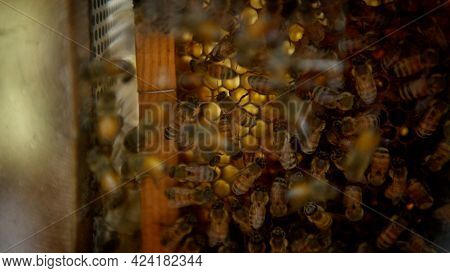 Closeup Of A Bunch Bees Swarming On Honeycomb In Apiary. Working Bees