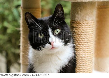 Close Up Head Portrait Of A Small Black And White Cat