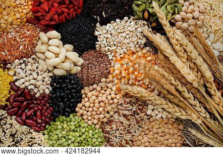 Variety Kind Of Dry Organic Cereal And Grain Seeds Pile With Bundle Of Dry Wheat In Dark Tone, For H