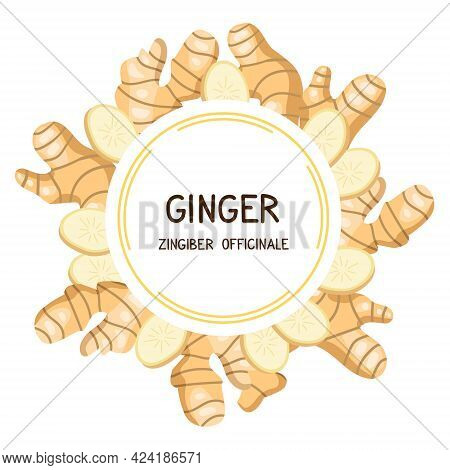 Ginger. Frame With Ginger Roots And Slices. Vector Illustration Isolated On White Background. Produc