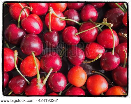 Cherry Background. Juicy Ripe Delicious Cherry Or Sweet Cherry Close-up From Above. Summer Fruits An
