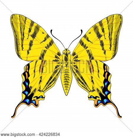 Beautiful Bright Yellow Butterfly Monarch. Vector Illustration Isolated.