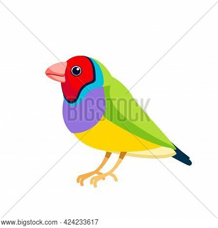 Gouldian Finch Or Lady Gouldian Finch, Goulds Finch Or The Rainbow Finch, Is A Colourful Passerine B