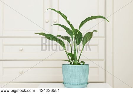 Indoor Plant In A Blue Patterned Pot Stands On A White Pedestal Against A Cupboard Background