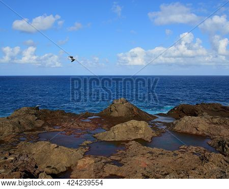 Rocky Coast With Puddles At Low Tide, Blue Sky, Clouds And Seagull Flying, Littoral Of Galdar, Gran