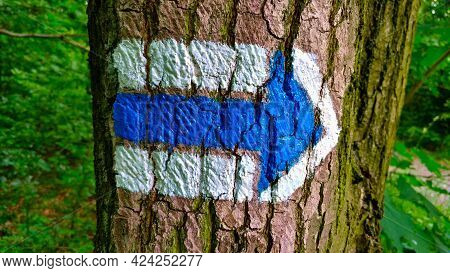 Blue Czech Touristic Symbol For Showing The Way Where To Go Pained Onto Tree Trunk. There Is Forest