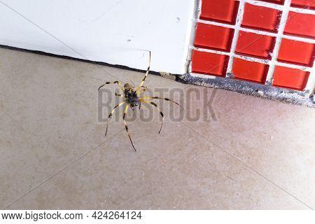 Spider Walking On The Floor, Large Arachnid Hidden Inside The House, Dirty Floor