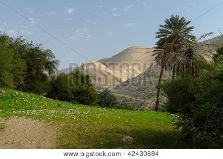Oase in Judean Wüste Wadi Qelt in der Nähe von Jericho im Frühjahr