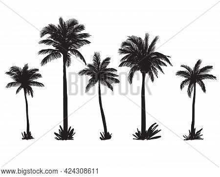 Silhouettes Of Palm Trees On A Wild Beach. Vector Sketch On White Background
