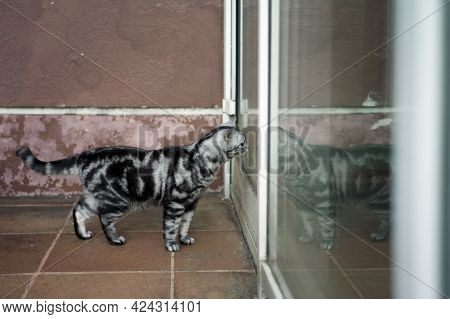 A Cat Standing In Front Of A Closed Door, Asking To Come In, Outdoor Scene