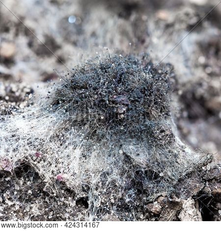 Mold Close-up. Close-up Of White Mold On The Soil. Beautiful Abstract Background. Fantastic Backgrou