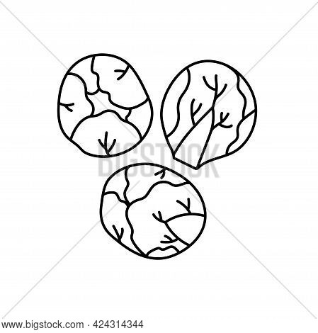 Brussels Sprouts. Vegetable Sketch. Thin Simple Outline Icon. Black Contour Line Vector. Doodle Hand
