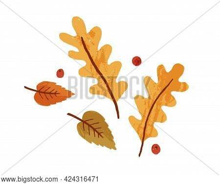 Dry Autumn Leaves And Rowan Berries. Fall Foliage Composition With Oak And Birch Leaf. Top View Of A