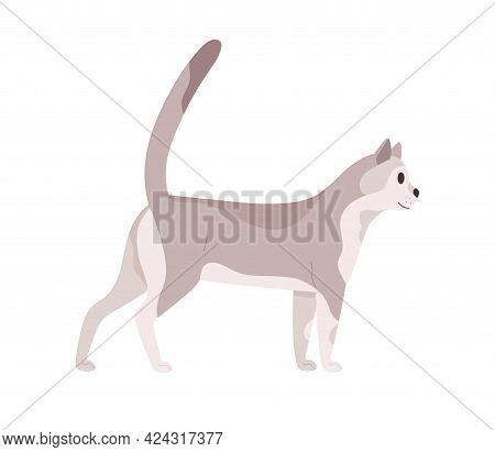 Cat Walking. Beautiful Slim Kitty. Feline Animal Standing With Tail Raised Up. Side View Of Friendly