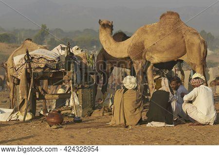 Pushkar, Rajasthan, India - November 7, 2008: Group Of Camel Herders At The Annual Pushkar Fair In R