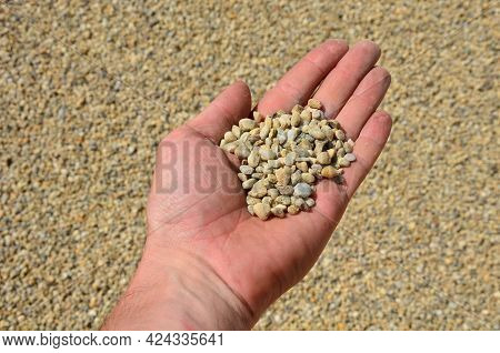 Man Holds In His Hand A Sample Of Stone Gravel Or Pebbles Of One Size. Marble White Gravel And Gray