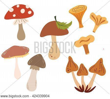 Set Of Different Mushrooms. Types Of Autumn Mushroom, Cep, Chanterelle, Honey Agaric, Oyster Mushroo