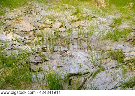 Dry Ground Surface With Crust And Young Grass Leaves