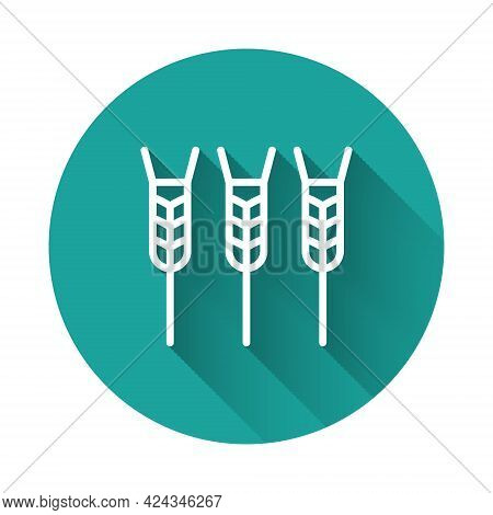 White Line Cereals Set With Rice, Wheat, Corn, Oats, Rye, Barley Icon Isolated With Long Shadow. Ear