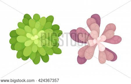 Succulent Plant With Thickened Fleshy Leaves Above View Vector Set