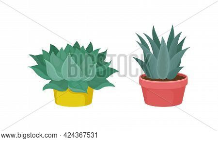 Succulent Plant With Thickened Fleshy Leaves Rested In Flowerpot Vector Set.