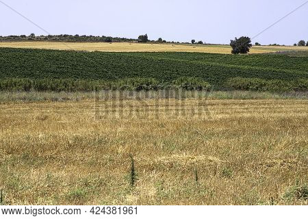 View Of Yellow And Green Agricultural Fields With Trees