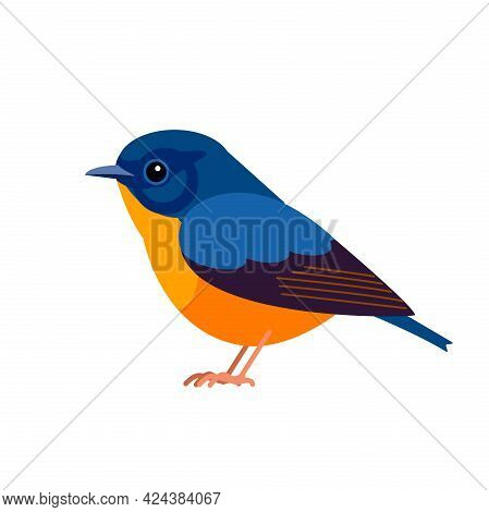 Blue-fronted Redstart Is A Species Of Bird In The Family Muscicapidae, The Old World Flycatchers. Ph