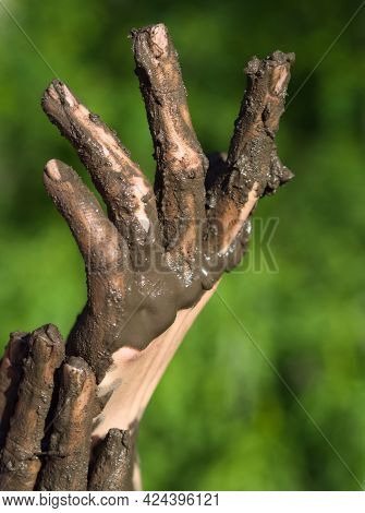 Dirty Wet Muddy Hands Of A Young Woman Outdoors On A Sunny Summer Day