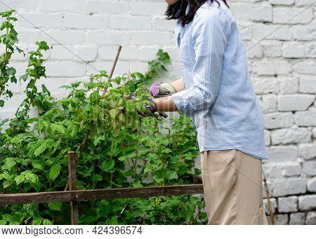 Woman Holding Secateurs Cutting Plants In Garden