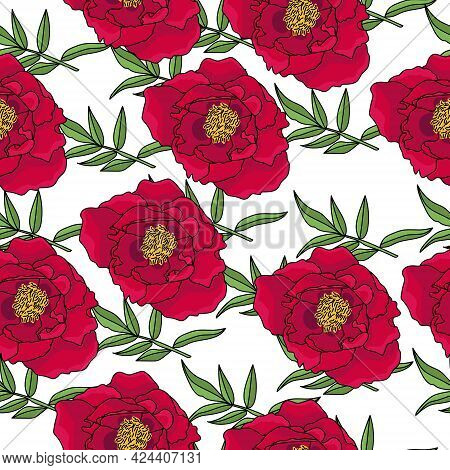 Seamless Pattern Of Dark Red Peonies And Green Vetoches With Oblong Leaves, Blooming Motifs On A Whi