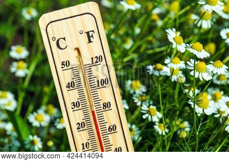Favorable Temperature For Flowering Chamomile. Close-up Of A Thermometer Against The Background Of N