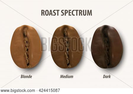 Three Stage Roasting Coffee. Vector 3d Realistic Coffee Beans. Textured Roasted Coffee Bean Set, Roa