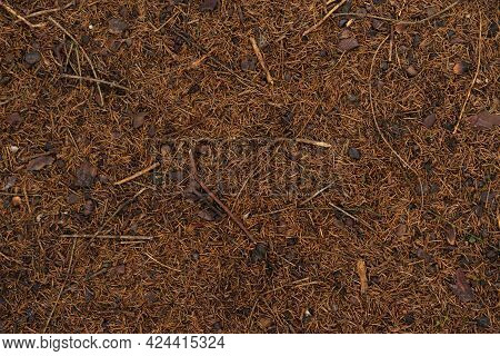 Pine Bumps And Needles Lying On The Ground