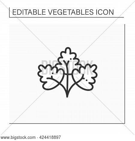 Parsley Line Icon. Fresh, Edible Flowering Plant. Flat Leaf, Root Parsley. Vegetarian, Healthy Nutri