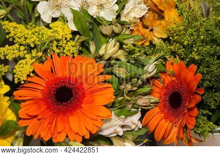 Bulk Of Orange Gerbera Know As African Daisy And Transvaal On A Bed Of Alstroemeria Or Peruvian Lily