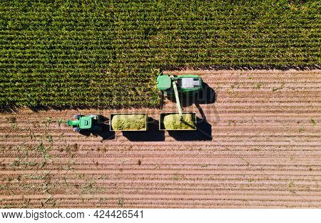 Corn harvest in the fields with transporter and harvester from above