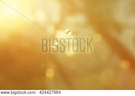 Blurred Background With Natural Solar Flare And Moths. Abstract Blurred Background. Abstract Blur Mo