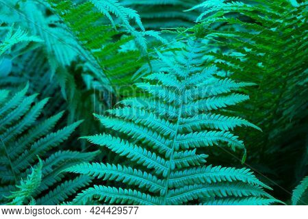 Beautiful Ferns Leaves Green Foliage Natural Floral Fern Background
