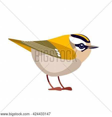 Firecrest Or Goldcrest Is A Very Small Passerine Bird In The Kinglet Family. Tiny Smallest Bird Cart