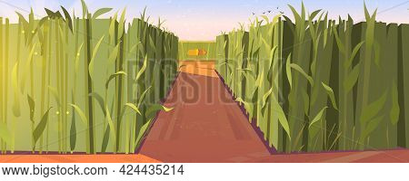 Cornfield Day Landscape With Wooden Road Pointers And High Green Plants. Choice Of Way Concept With