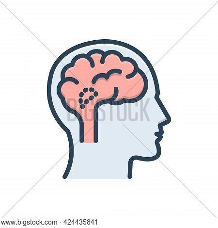 Color Illustration Icon For Hypothalamus Endocrine Brain Cerebellum Medical Anatomy