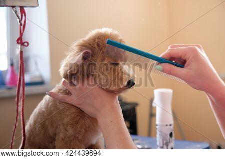 A Groomer Combs A Dog On A Table In An Animal Salon. Animal Care Concept